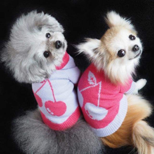 Dog-Kiss Luxury・Aerbasi・カシミア・ニット【XS~MS】