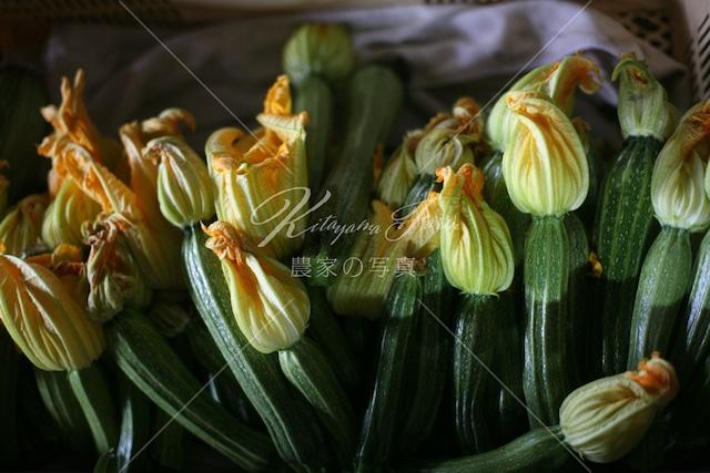 089 ズッキーニの花