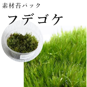 フデゴケ 苔テラリウム作製用素材苔