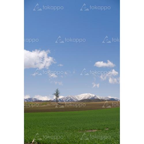 春のポロシリ岳