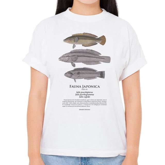 【キュウセン・ニシキベラ】シーボルトコレクション魚譜Tシャツ(高解像・昇華プリント)