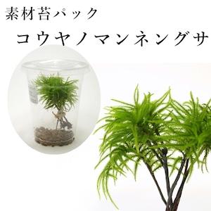 コウヤノマンネングサ 苔テラリウム作製用素材苔