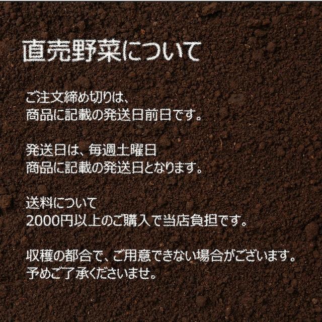 新鮮な秋野菜 : ネギ 3~4本 10月の朝採り直売野菜 10月24日発送予定