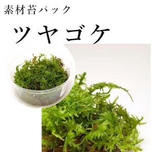 ツヤゴケ 苔テラリウム作製用素材苔