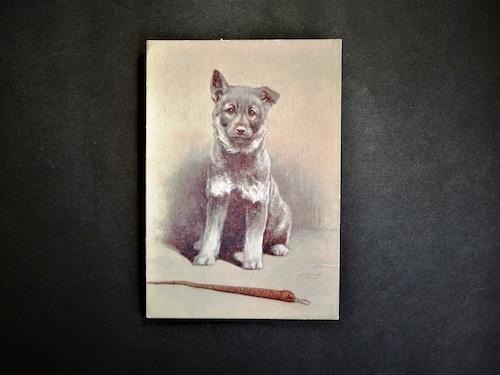 イギリス アンティークポストカード 犬の絵 絵葉書 The Elkhound エルクハウンド