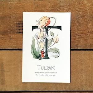 ポストカード「チューリップ@TULPAN(王子たちの花文字 - 20)」
