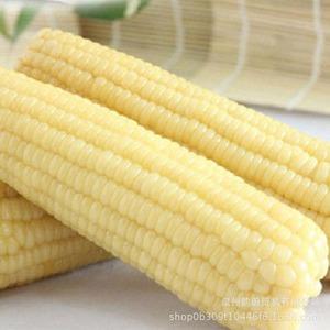 【冷凍便】冷凍白糯玉米棒2根装(冷凍トウモロコシ2本入り)