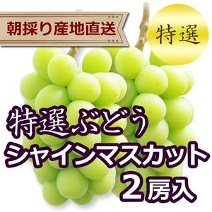 【特選ぶどう】シャインマスカット 2房