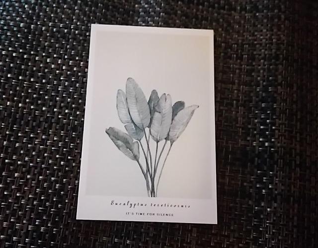 ポストカード K   植物