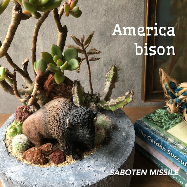 America bison
