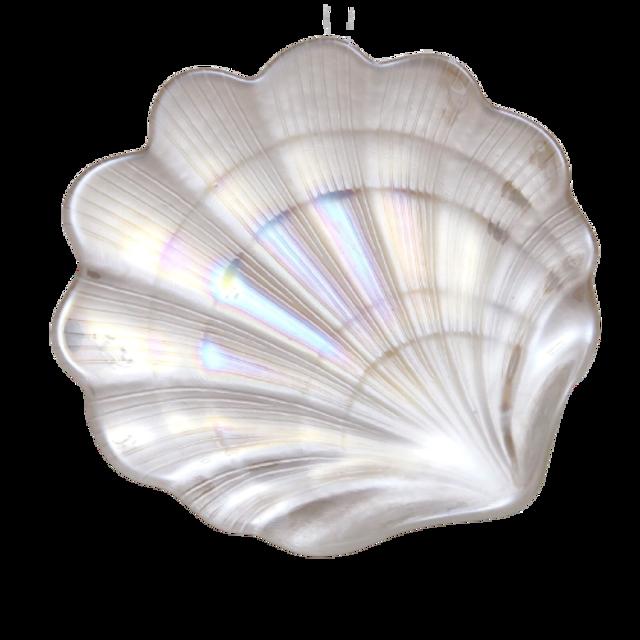 Aurora shell plate  / オーロラシェルプレート