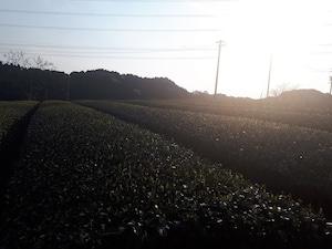 手炒りほうじ茶(100g)