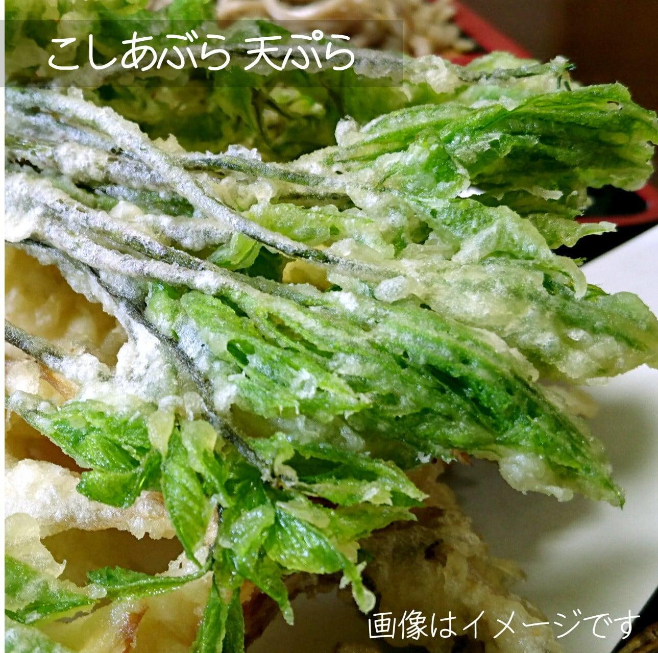 4月の山菜 こしあぶら 約50g 朝採り直売野菜 5月上旬発送予定
