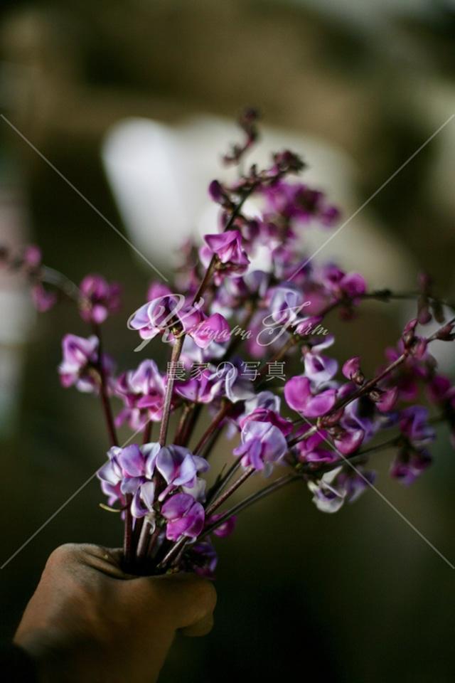 187 ルビームーン「食用花」