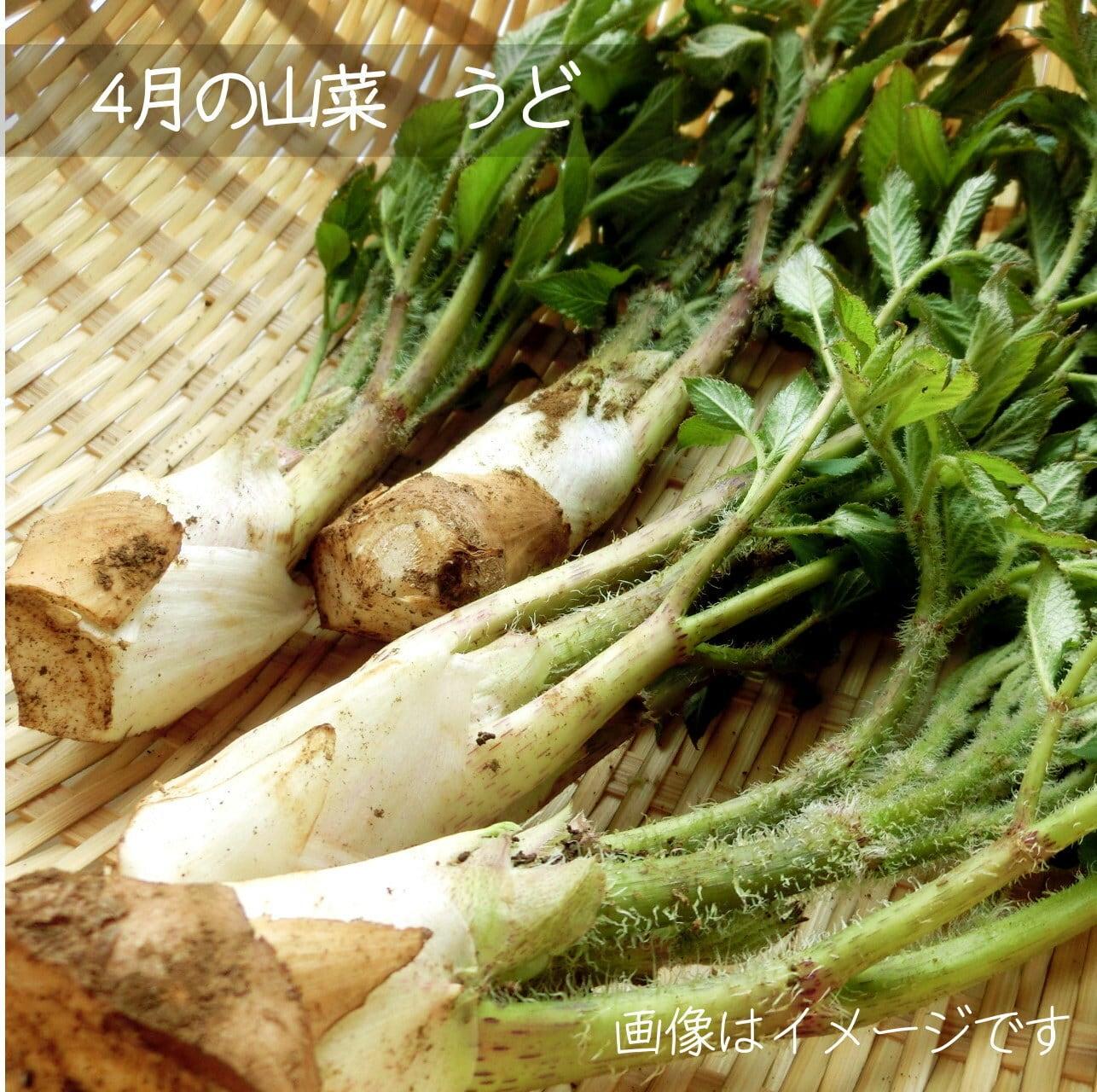 ウド 山菜 4月の朝採り直売野菜 春の新鮮野菜 5月上旬発送予定