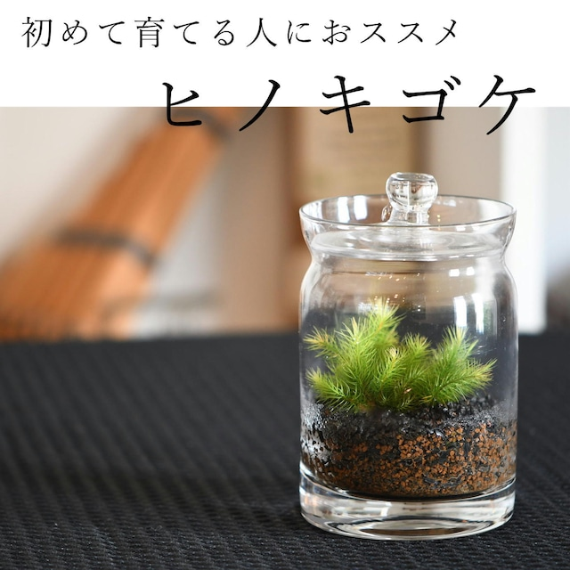 【初めて育てる人におススメ 苔テラリウム】小さな苔の森 ヒノキゴケ キャニスターロング