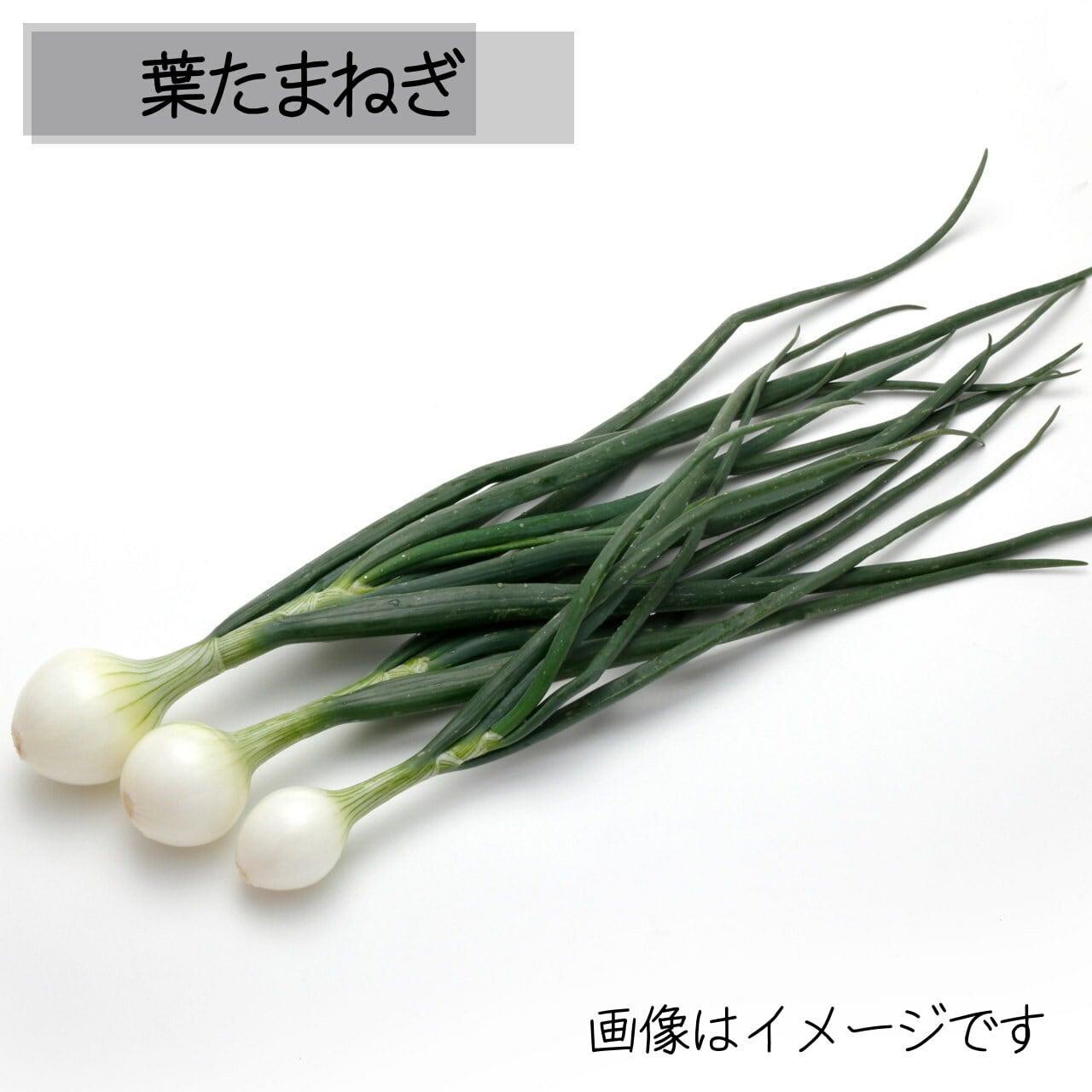 5月の朝採り直売野菜:葉たまねぎ 3~4本 春の新鮮野菜 5月15日発送予定