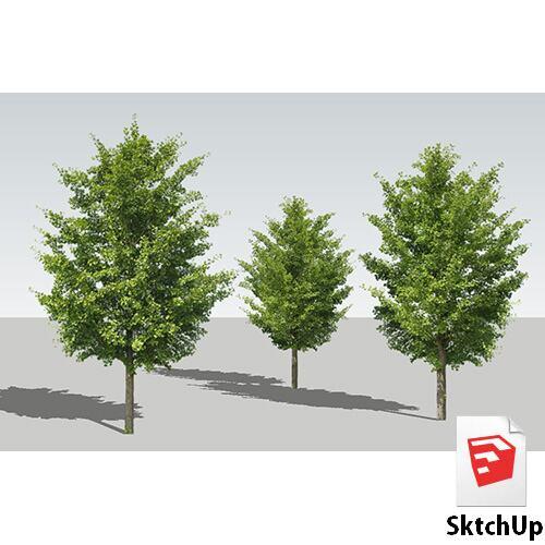 樹木SketchUp 4t_006 - 画像1
