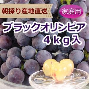 ブラックオリンピア 4kg(家庭用ぶどう)種なし
