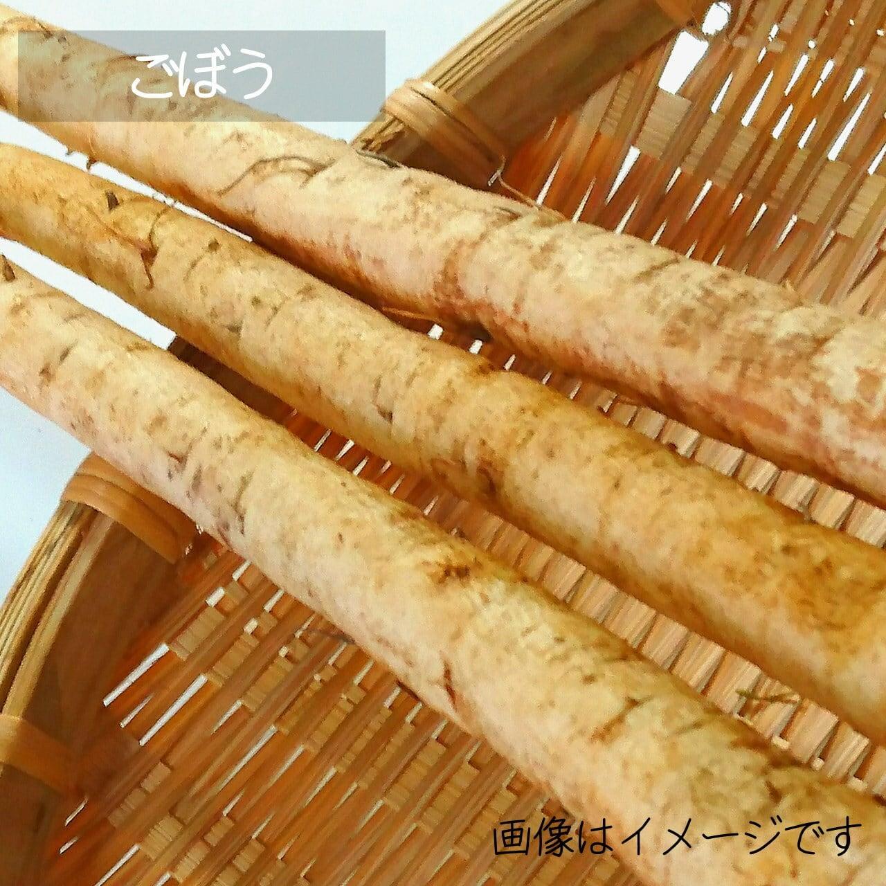 新鮮な秋野菜 : ゴボウ 1~3本 9月の朝採り直売野菜 9月12日発送予定