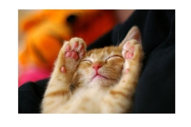 ばんざい猫ポストカード(4枚セット)