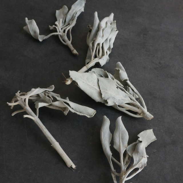 【ホワイトセージ】浄化&ヒーリング