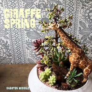 Giraffe spring