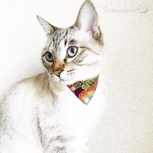 【菊毬柄】猫用バンダナ風首輪/選べるセーフティバックル 猫首輪