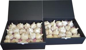 【数量限定】令和3年 新物 北海道常呂(ところ)町産 ピンク種 にんにく Mサイズ以上  (1.5kg×2) 予約販売9月中旬頃発送予定
