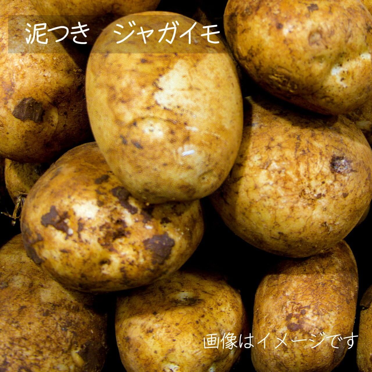 新鮮な秋野菜 : ジャガイモ 約600g 11月の朝採り直売野菜 11月7日発送予定