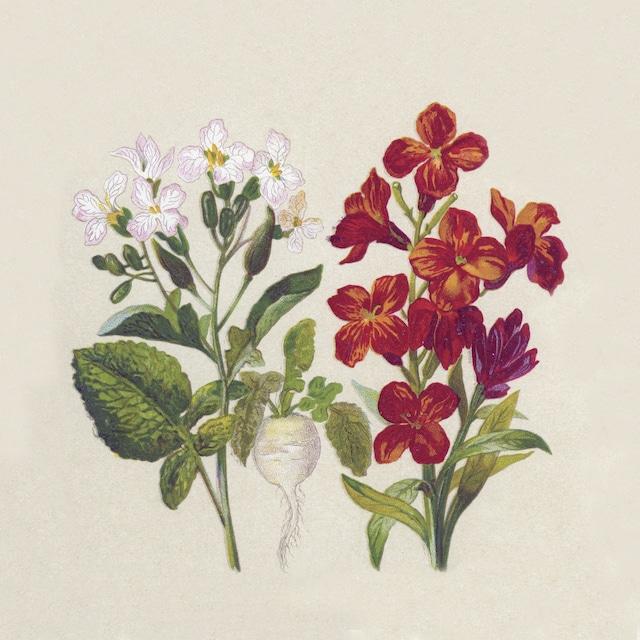 【NATURALS】バラ売り2枚 ランチサイズ ペーパーナプキン BOTANICAL ナチュラル