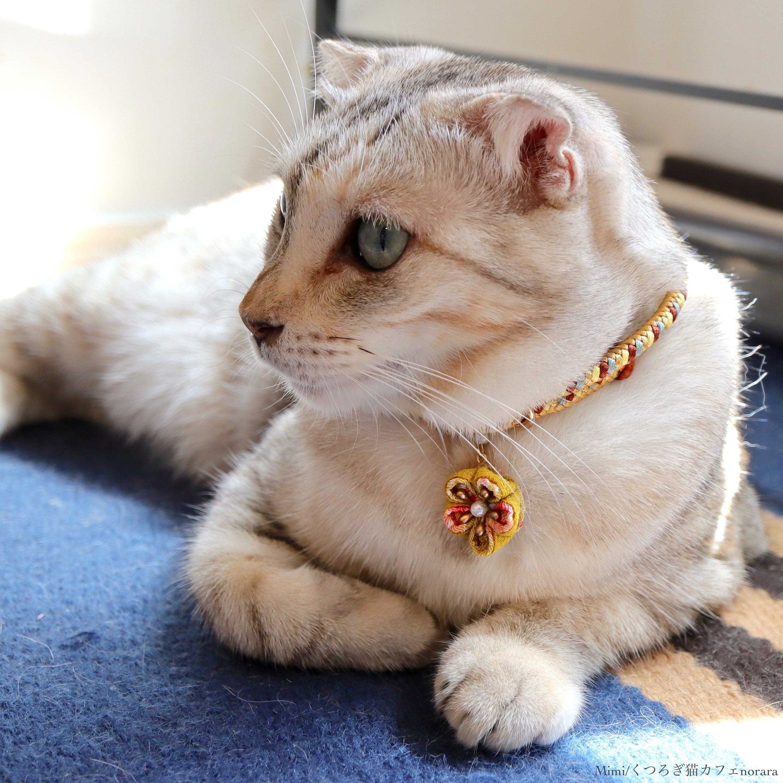 【猫首輪】Cinnamon シナモン