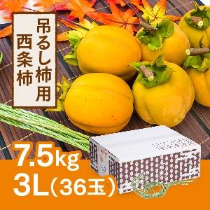 【予約 11月初旬頃より順次発送】吊るし柿用西条柿 3L 36玉(7.5kg)  吊るし紐付き