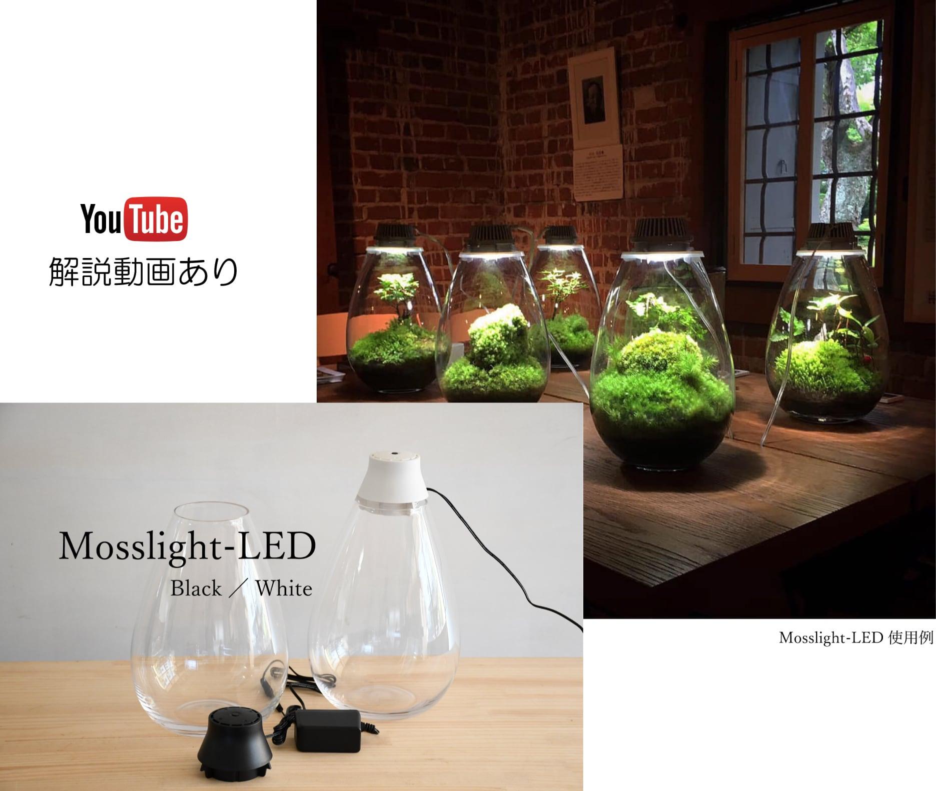 【LED照明つきテラリウム容器】  Mosslight-LED モスライト