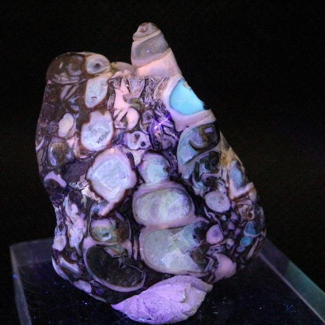 ツリテラ アゲート 研磨 化石 巻貝 瑪瑙   原石  16,9g TRL003 鉱物 天然石 パワーストーン