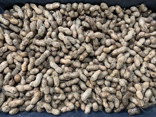 Lac Tuoi (500g) - Fresh Peanut