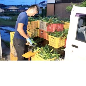 ★助けてください!和歌山県産 朝採り産直!!とうもろこし「ゴールドラッシュ」 約4kg(10~12本)