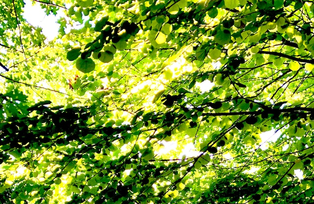 Photo Sunlight through trees