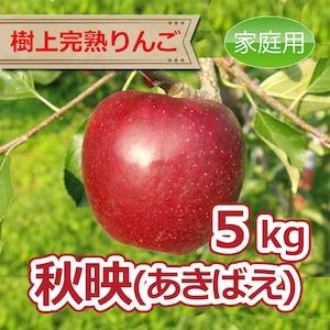 秋映 5kg