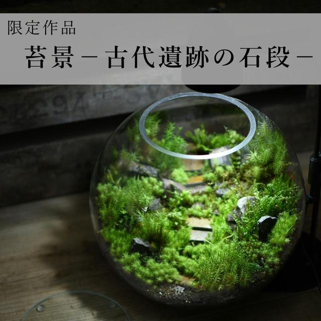 苔景−古代遺跡の石段−【苔テラリウム・現物限定販売】2021.4.23#6