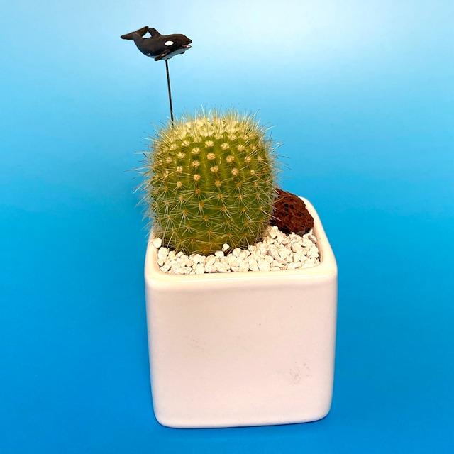【受注生産品】ポット2種類 シャチ サボテン su-01syachi 観葉植物 夏 さぼてん カクタス インテリア グリーン ミニチュア かわいい 動物 フィギュア
