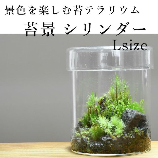 【景色を楽しむ苔テラリウム】苔景シリンダー Lsize ◆プレゼントに人気