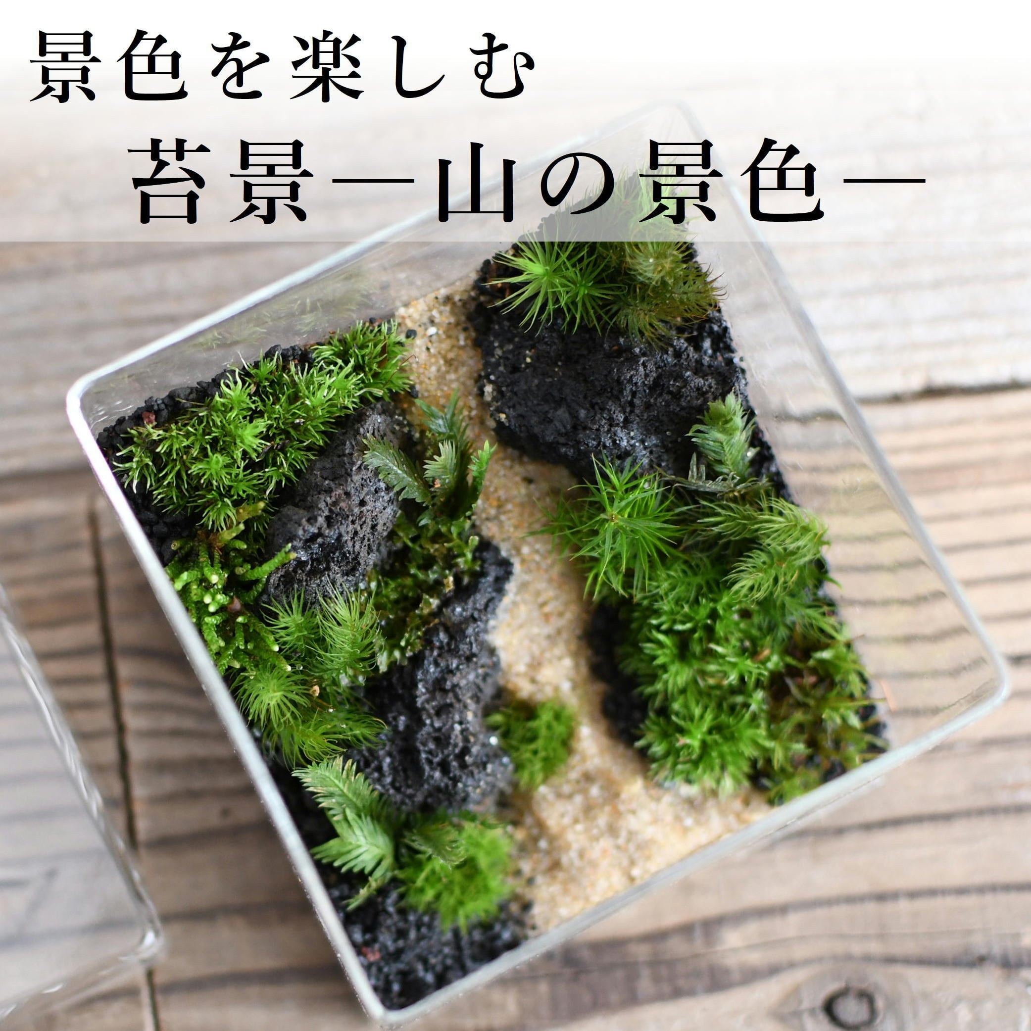【景色を楽しむ苔テラリウム】苔景−山の景色− BOX Lsize ◆選べる2種