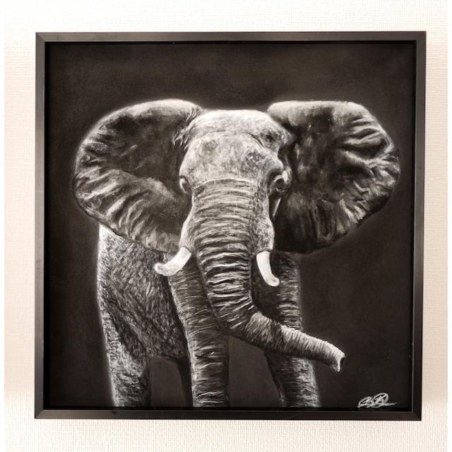 Elephant in Monochrome