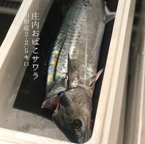 庄内おばこサワラ 2-2.5kg 山形産【おばこ鰆2Kx1】冷蔵