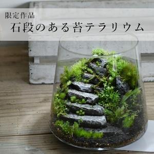 苔景−石段のある苔テラリウム−2021.3.31#3【苔テラリウム・現物限定販売】