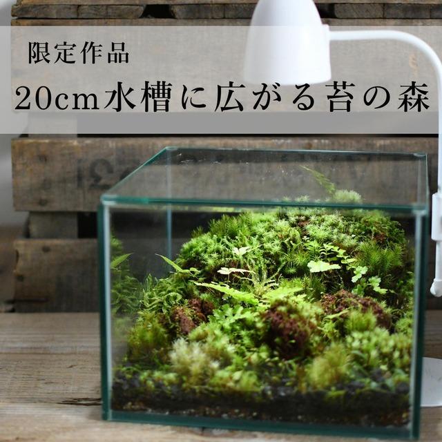 20cm水槽に広がる苔の森 【苔テラリウム・現物限定販売】