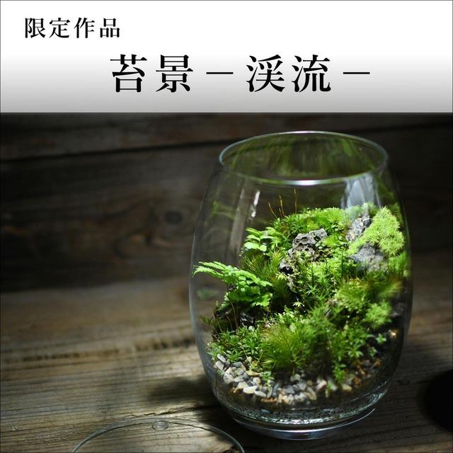 苔景-渓流-【苔テラリウム・現物限定販売】2021.10.22#3