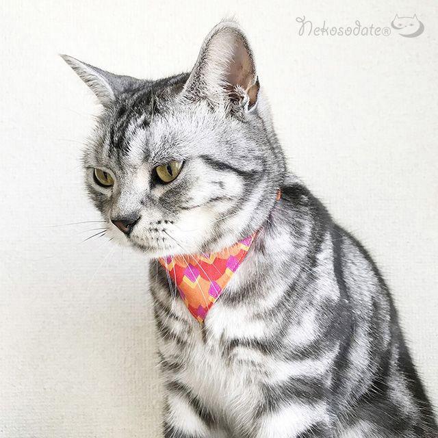 【ロンバス柄】猫用バンダナ風首輪/選べるアジャスター 猫首輪 安全首輪 子猫から成猫