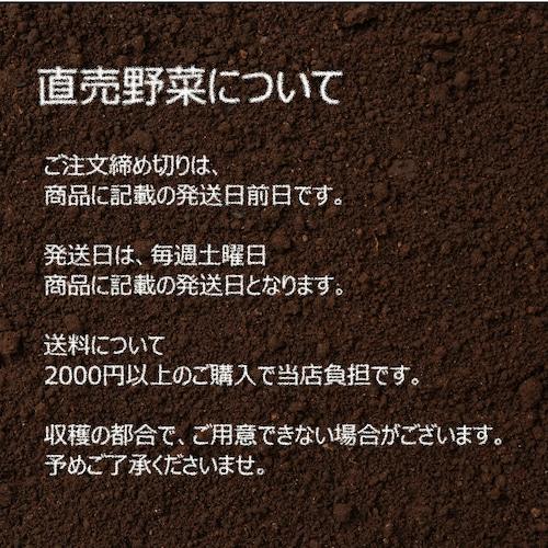 10月の朝採り直売野菜 : 春菊 約300g 新鮮な秋野菜 10月24日発送予定